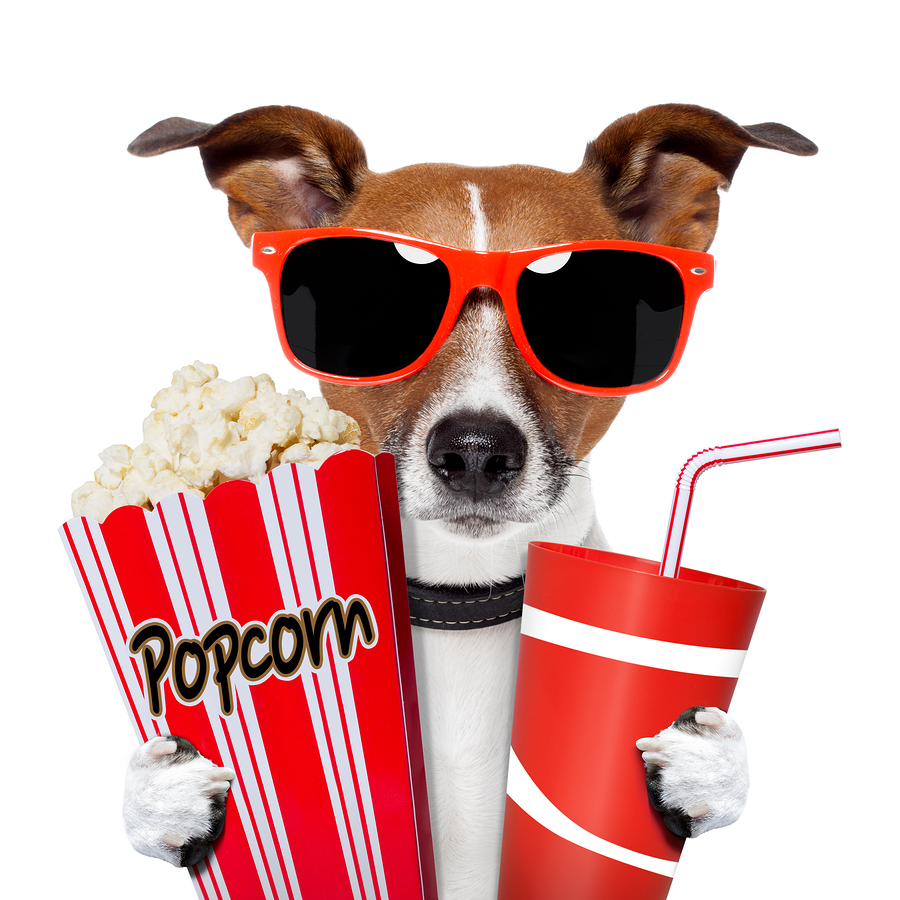 Puppy with Popcorn at the Movies